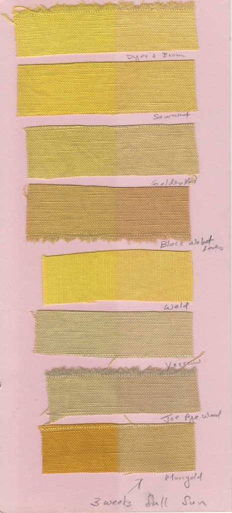 Recent lightfast tests using yellows harvested from my garden, August, 2015. Weld (Reseda luteola), Saw-wort (Serratula tinctoria), and Dyer's broom (Genista tinctoria) all contain the same colorant, luteolin