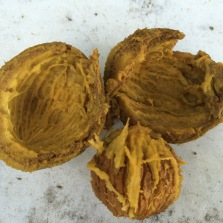 Walnut has been cooked long enough to split open the exocarp or outer skin