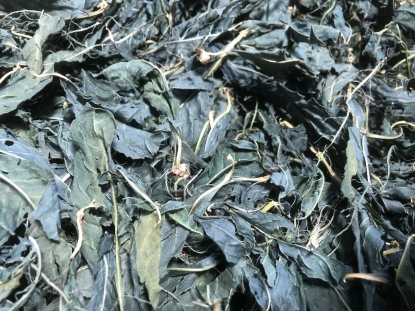 Dried Polygonum tinctorium leaves. These were crushed and added to the fermentation vat.